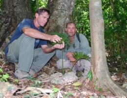 UOG Professor Thomas Marler (left) and Navy Natural Resources Specialist Paul Wenninger inspect a healthy fadang plant growing safely in the Navy's conservation planting in Tinian.